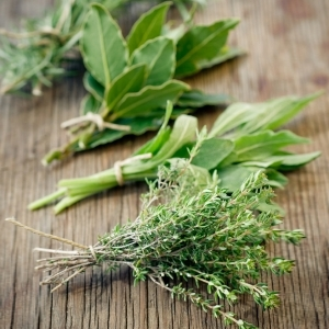Harvesting your herbs