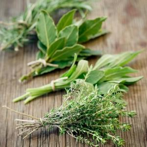 Spring herb planting guide